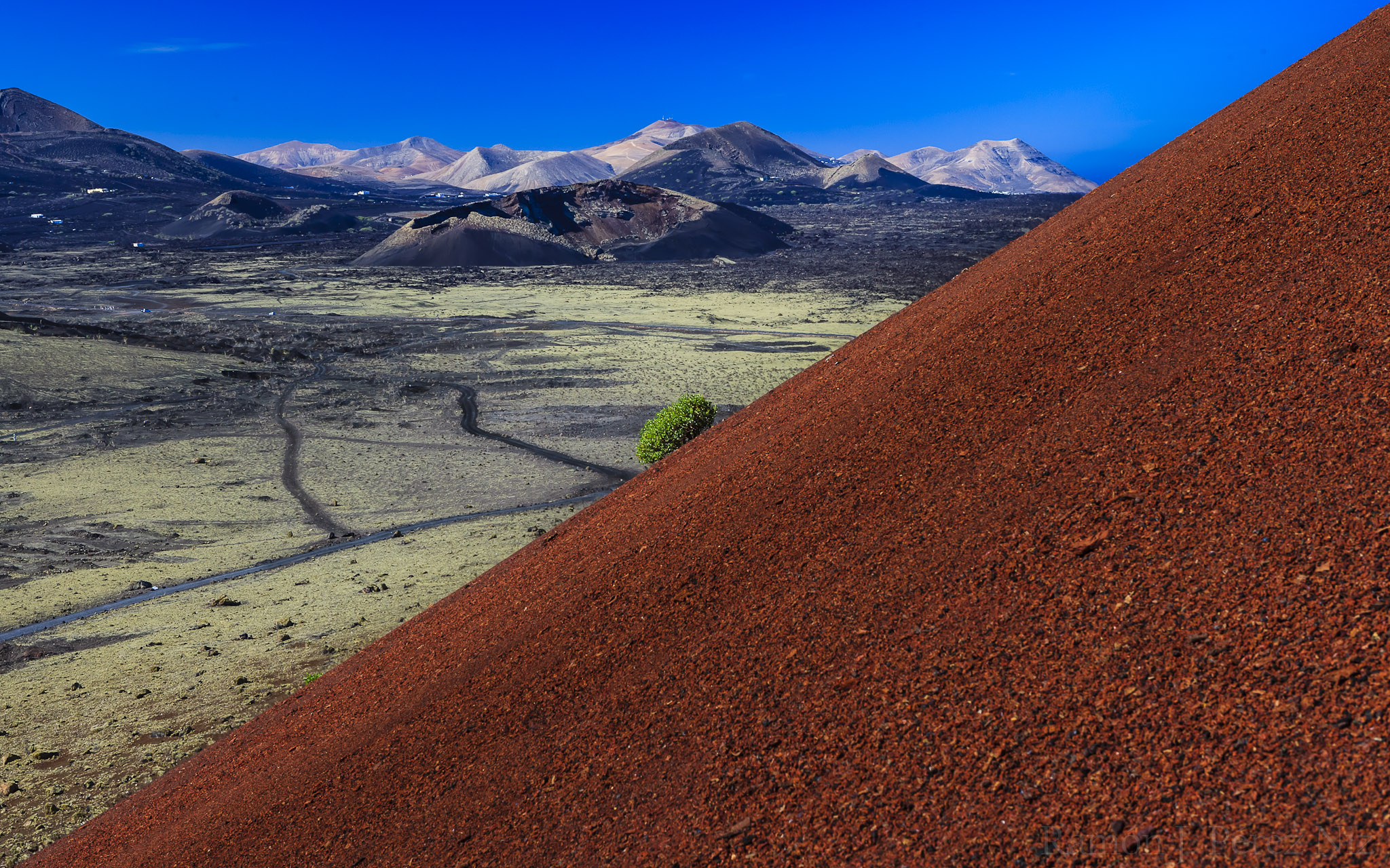 Una planta en Montaña Colorada, al fondo el volcán del Cuervo, La Geria y Los Ajaches.